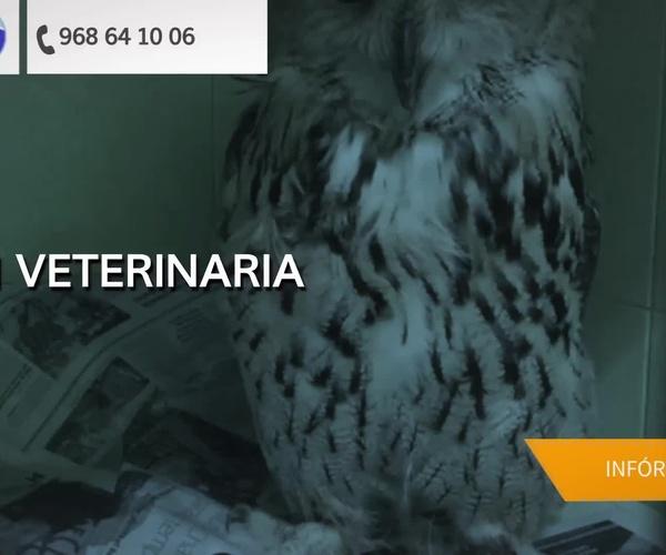 Especialistas veterinarios en Murcia: Clínica Veterinaria y Residencia Zoopark