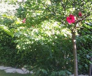Galería de Jardines (diseño y mantenimiento) en Vélez-Málaga | Plante Verde
