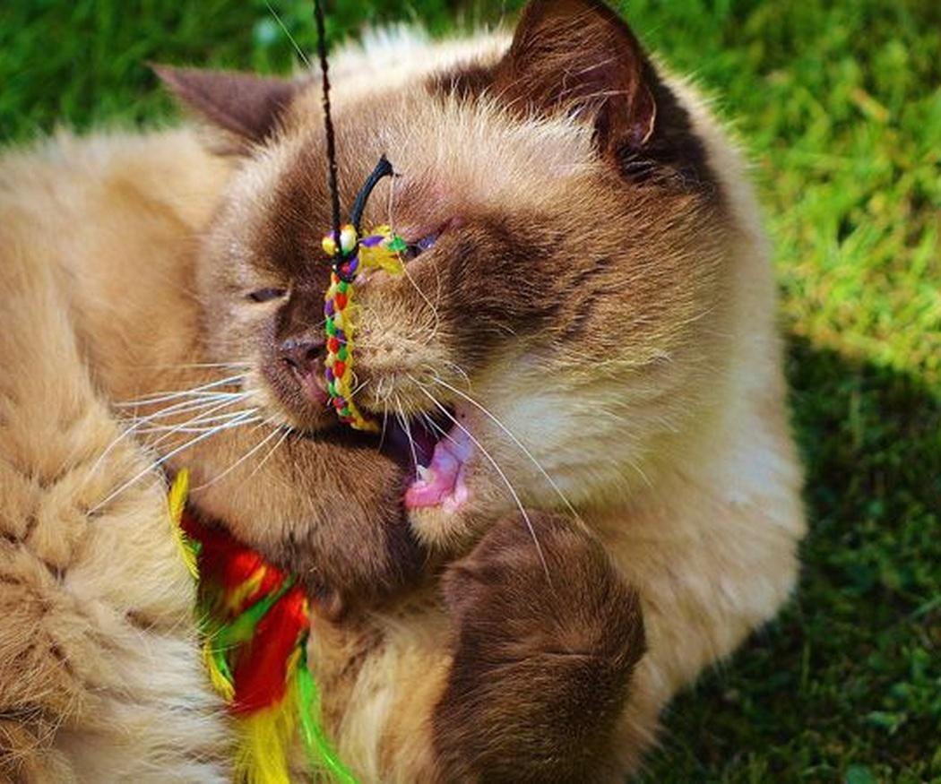 Motivos para jugar con tu gato