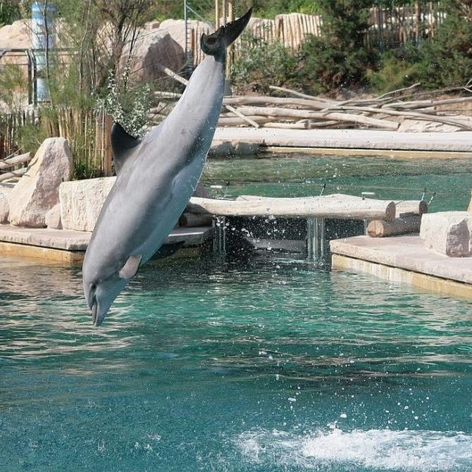 Senda Viva, el zoológico y parque temático de Navarra