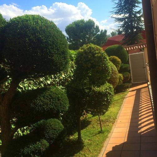 Mantenimiento de jardines y piscinas en Ávila | Jardinería FG