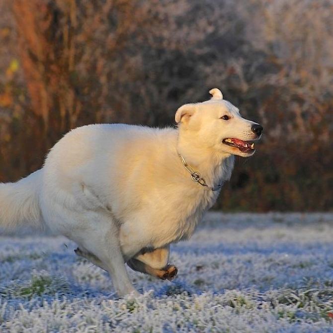 Algunos consejos para cuidar tu perro en invierno