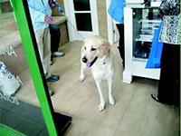 Vacunación de perros Las Rozas - Centro Veterinario La Tortuga