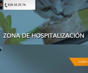 Clínica veterinaria en Fuerteventura | Species Veterinarias
