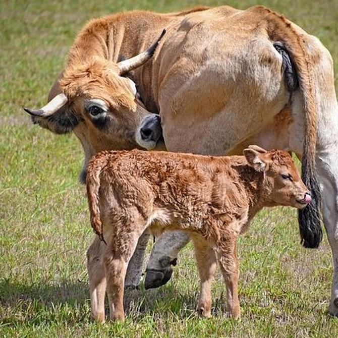 Porqué deberías optar por consumir carne ecológica