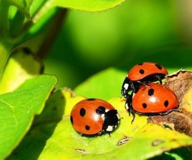 Insectos para el control de plagas urbanas