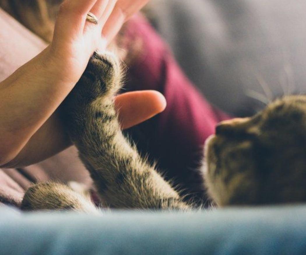 Cuida a tu gato jugando con él