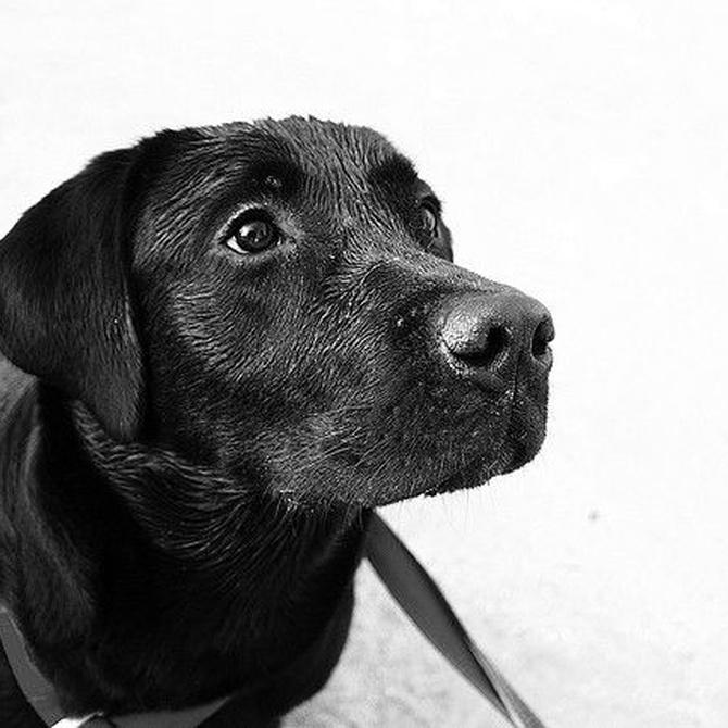 ¿Cómo debe ser la alimentación de nuestro perro?