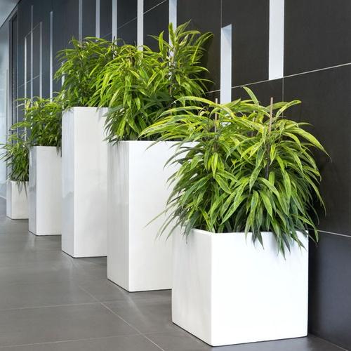 plantas de interior en hidrocultivo - nuevas jardineras
