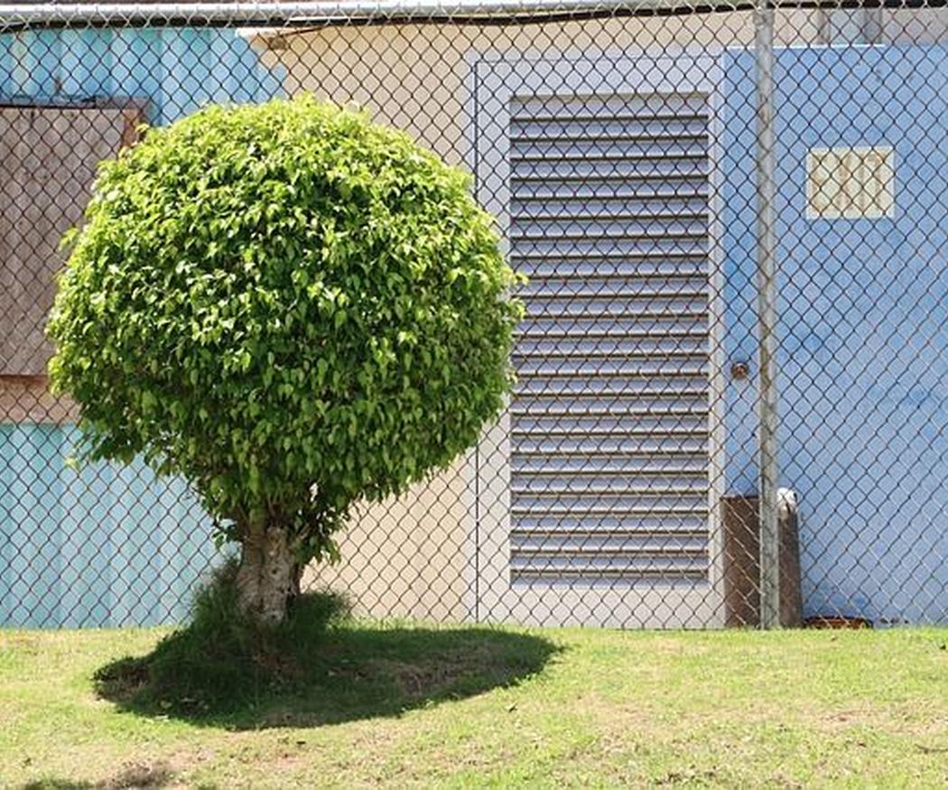 ¿Cuándo es el mejor momento para podar árboles? Calendario de poda