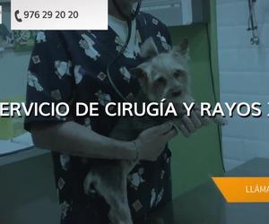 Veterinarios en Zaragoza | Clínica Veterinaria Parque Bruil