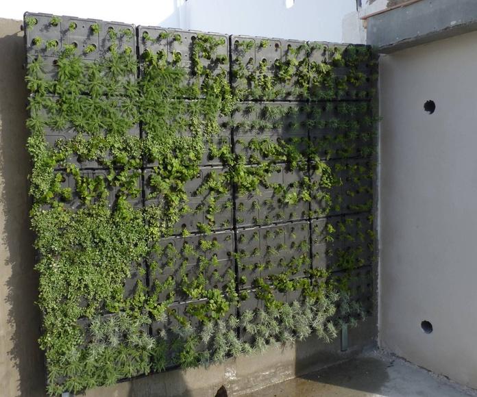 Instalación de jardín vertical