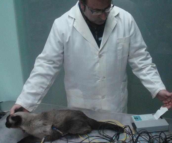 Electrocardiograma canino Zaragoza: Nuestros Servicios de Argos Clínica Veterinaria