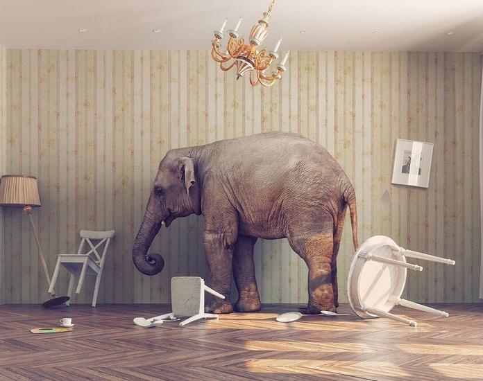 ¿Has dejado entrar a un elefante a tu habitación?