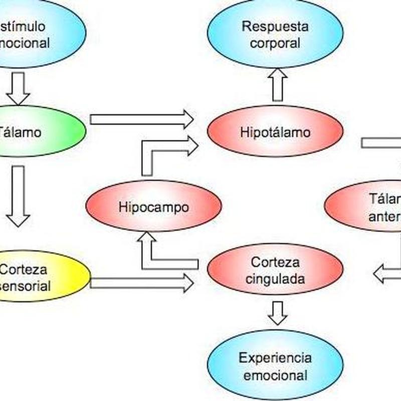 Circuitos de Conciencia