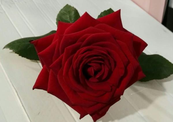 Especial San Valentín 2017: Arte floral de Isabella Arte Floral