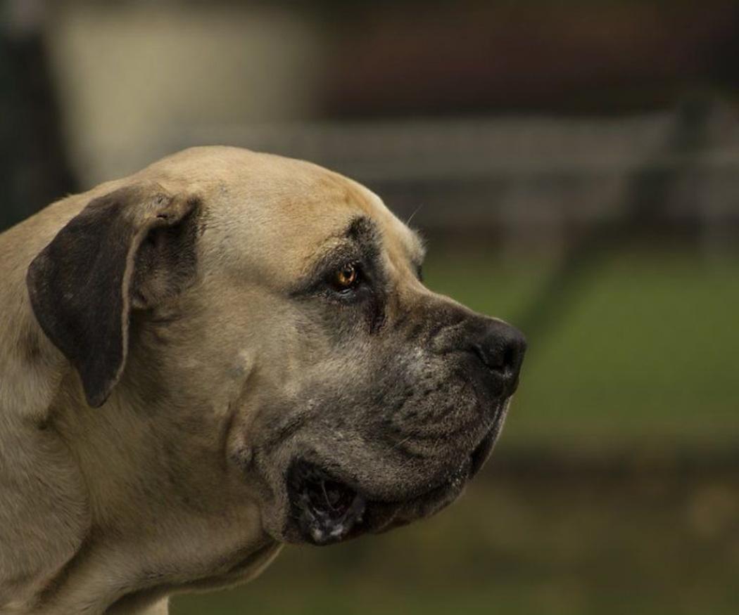 Claves en la alimentación de los perros ancianos