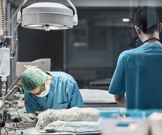 Analítiques: Serveis especialitzats de Arca Veterinaria