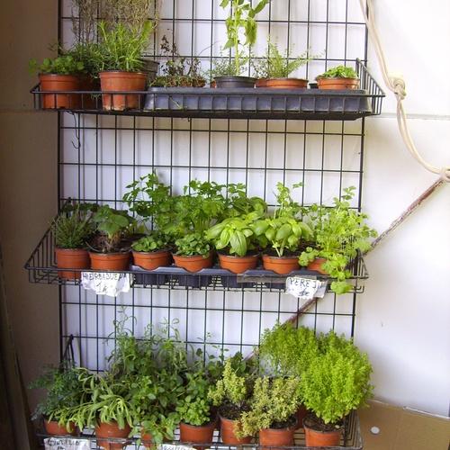 Plantas en Pilas