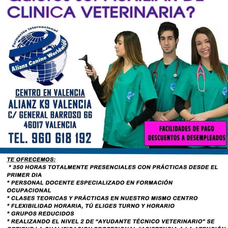 Curso de auxiliar de clínica veterinaria en Murcia