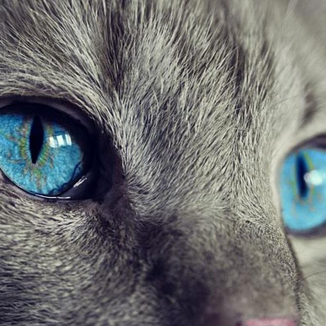 Todo sobre la insuficiencia renal en los gatos