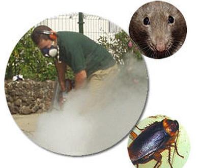 Control de plagas Las Palmas