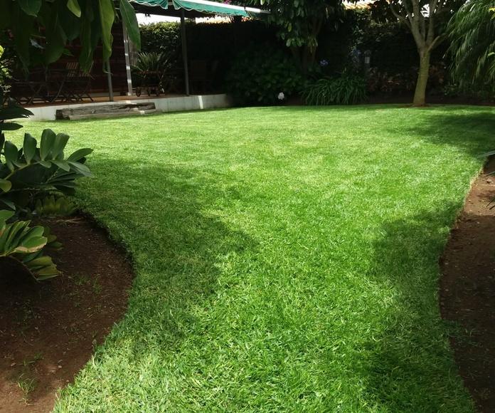 Mantenimiento de jardinería: Servicios de GT Verde