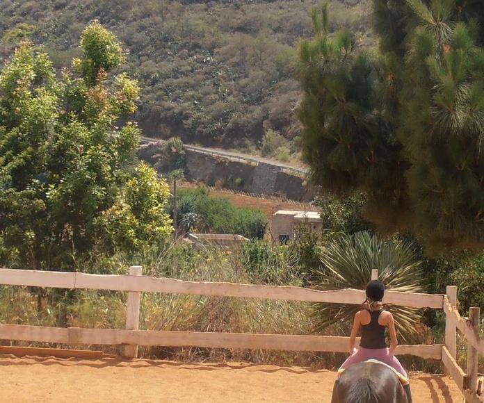 Mini paseos en pony /caballo: Servicios de Centro Hípico San Mateo