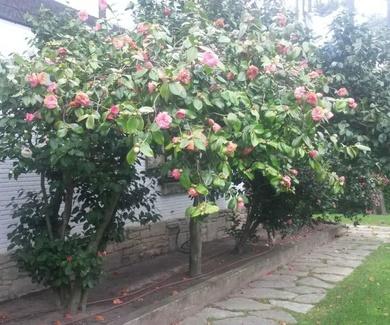 Riego automático en su jardín: por goteo