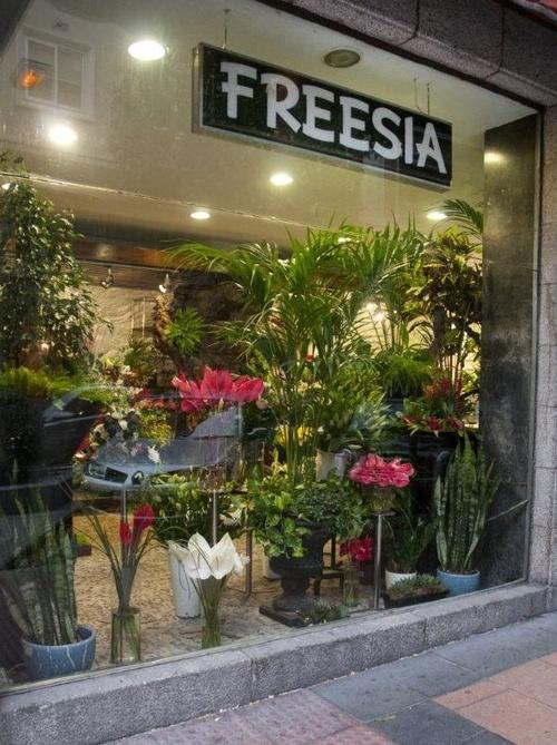 Flores Freesia Madrid
