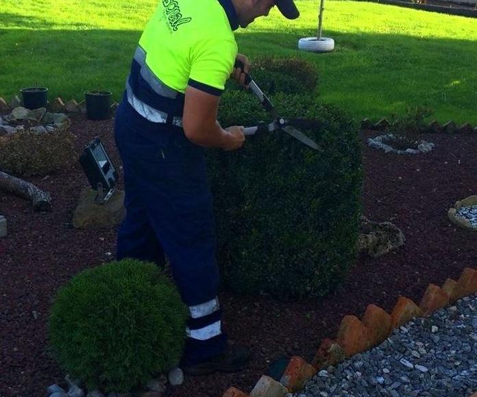 mantenimiento de jardines en Gijón. Grupo Discreal
