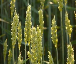 Diversas variedades de semillas