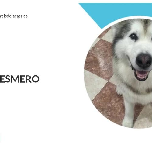 Accesorios para mascotas en Girona| Els Reis de la Casa