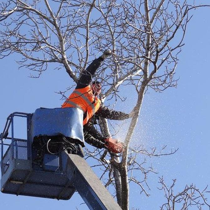 El final del invierno es la época recomendada para podar casi todos los árboles