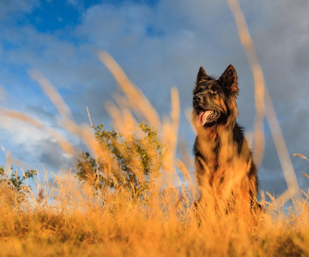 ¿Qué puedes hacer si tu perro tiene displasia de cadera?