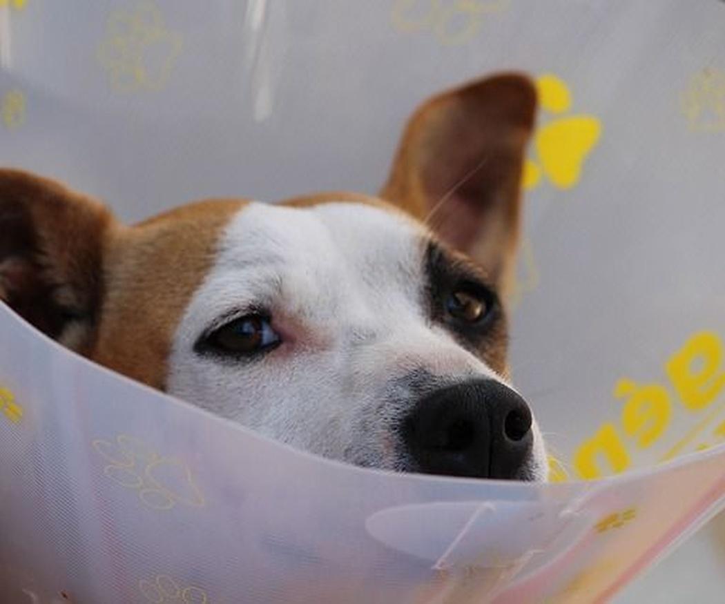 Las ventajas de la fisioterapia en animales