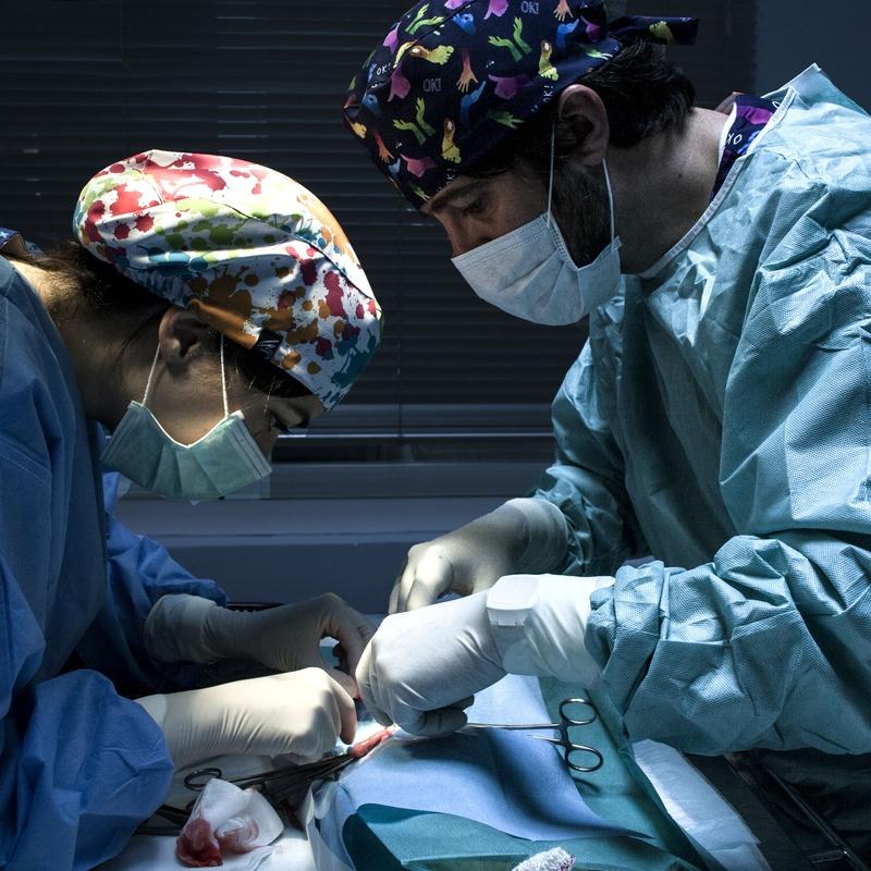 Servicio 24 horas en Ciudad Real: Servicios Veterinarios de Hospital Veterinario Ciudad Real