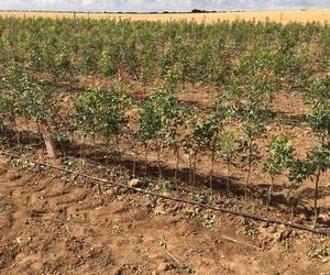 Vivero, plantas vivas, aromáticas, siembra, semillas en Segovia