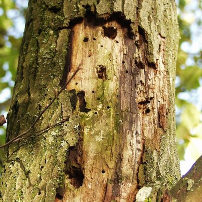 La madera, una golosina para las termitas que hay que proteger