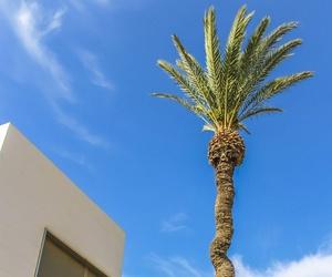 Mantenimiento de zonas ajardinadas con palmeras