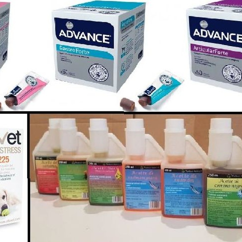 Complementos y suplementos nutricionales: Productos y servicios de Zintzo