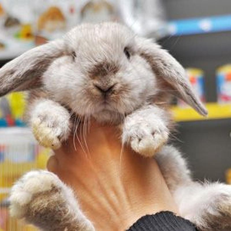 Conejos, chinchillas y coballas: Productos de Mascotas Madrid