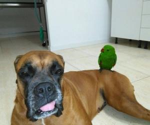 veterinario mascotas Tenerife