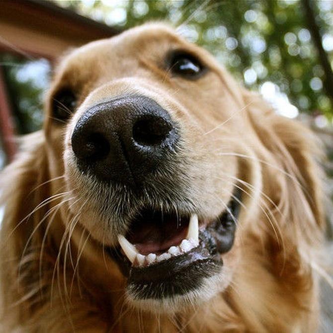 Consejos para cuidar la higiene dental de los perros