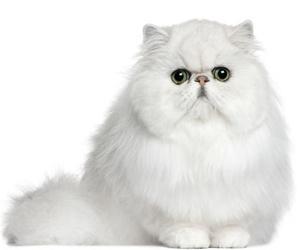 Estética felina Sants