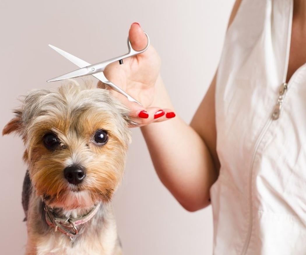 Ventajas de la peluquería canina a domicilio
