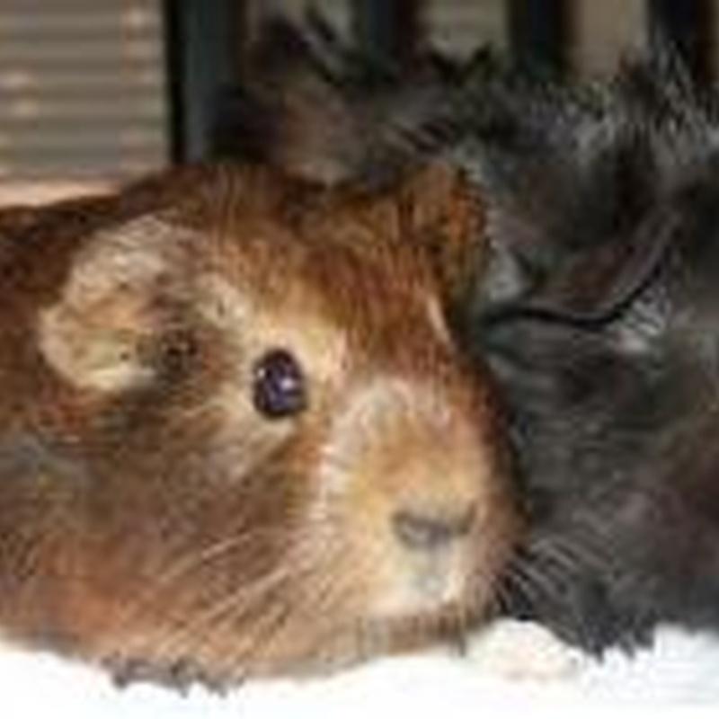 Veterinario de animales exóticos: Catálogo de Clínica Veterinaria Los Galgos 928 252685 -  Peluquería Los Galgos 928 201156