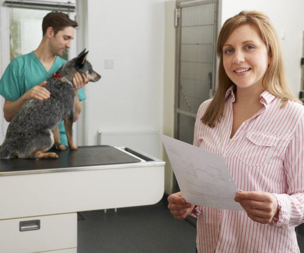 Chequeos preventivos para animales domésticos