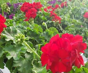 centro de jardineria sagunto