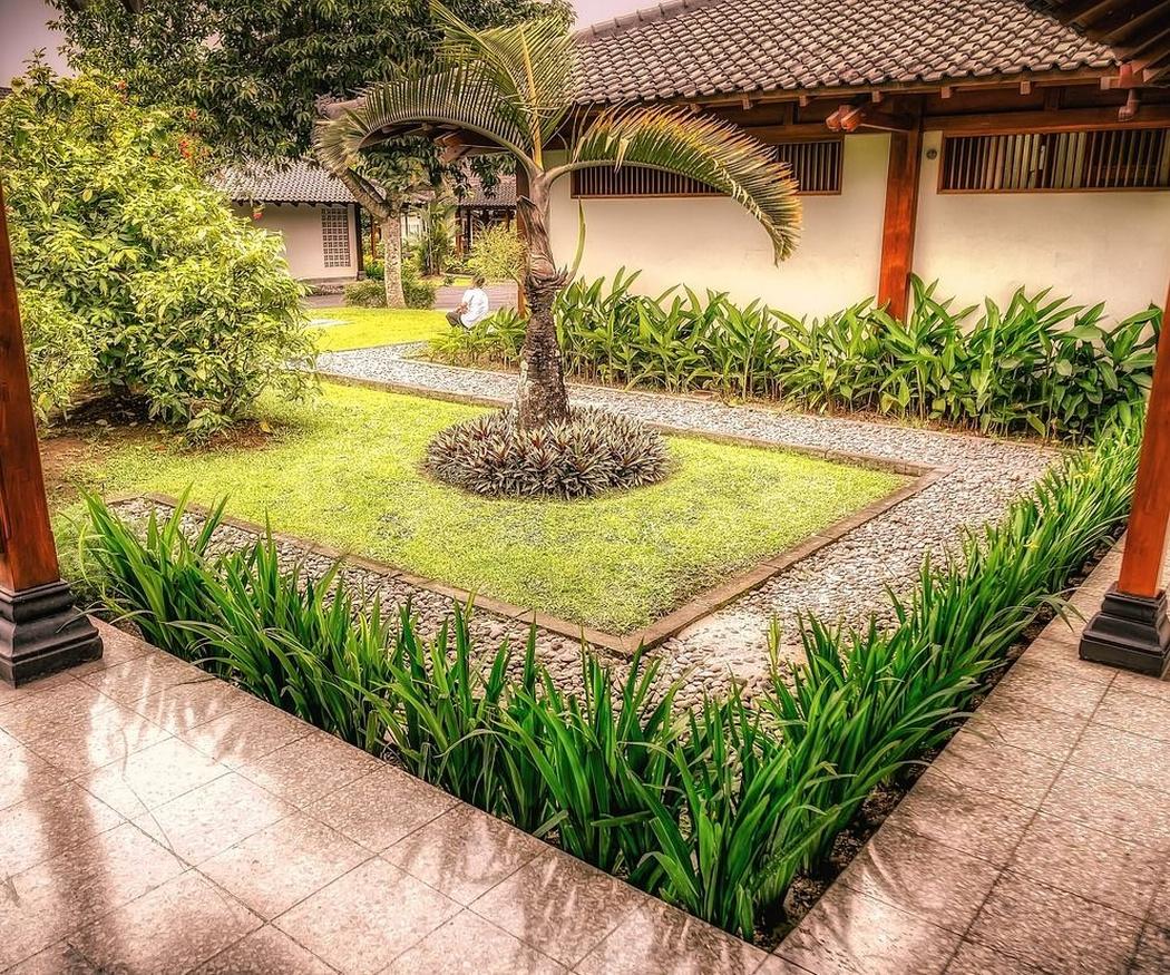 4 árboles ideales para jardines pequeños